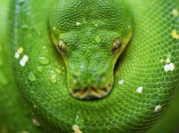 If Snake-X then Antidote-Y; green snake close-up